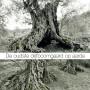 De-oudste-olijfboomgaard-op-aarde